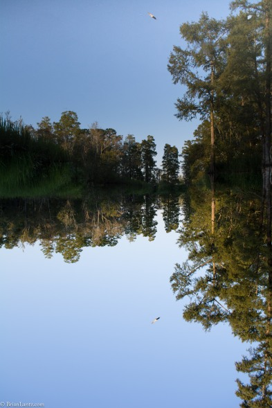 #NavassaNC #Mirror #Inverted #NikonD7100 #Nikon #NorthCarolina #UpsideDown #River #Brackish #Bird #reflection